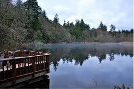 Pond at islandwood.jpg